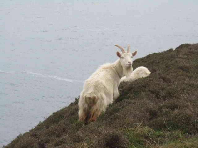 What do you want? © M J Richardson :: Geograph Britain and Ireland