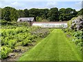 SJ7481 : Kitchen Garden at Tatton Park by David Dixon