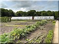 SJ7481 : Tatton Park Vegetable Garden by David Dixon