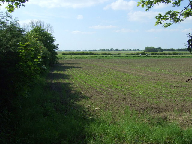 Crop field off High Road, Bunker's Hill