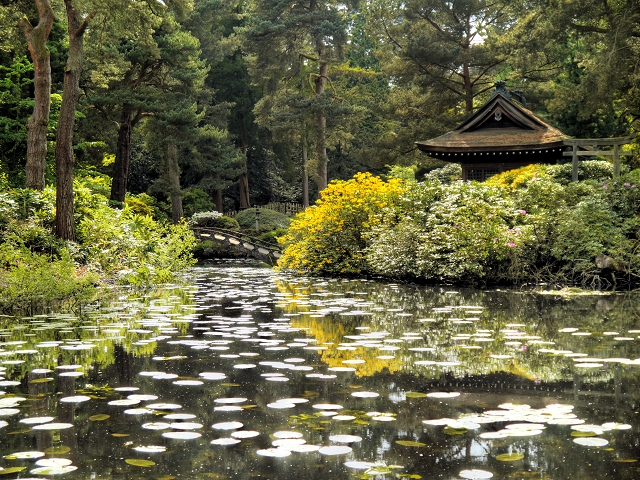 Golden Brook and the Japanese Garden at Tatton Park
