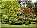 SJ7481 : Japanese Garden, Tatton Park by David Dixon