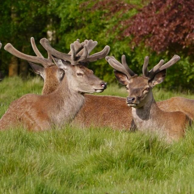 Young Bucks at Tatton