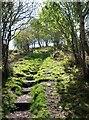 SX3467 : Steps to Cadson Bury by Derek Harper