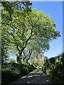 SX3271 : Lane at Golberdon by Derek Harper