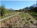 NS5185 : West Highland Way near Killearn by Lairich Rig