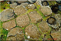 C9444 : County Antrim - Giant's Causeway - Tops of Basalt Columns by Suzanne Mischyshyn