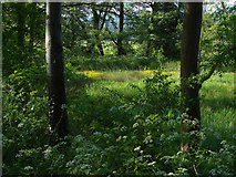SU9946 : Wet woodland by Alan Hunt