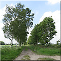 SE6676 : Tree-lined trackbed by Pauline E