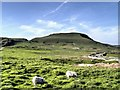 SK1282 : Sheep at Windy Knoll by David Dixon