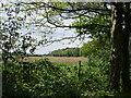 SE7647 : Woodland edge by Jonathan Thacker