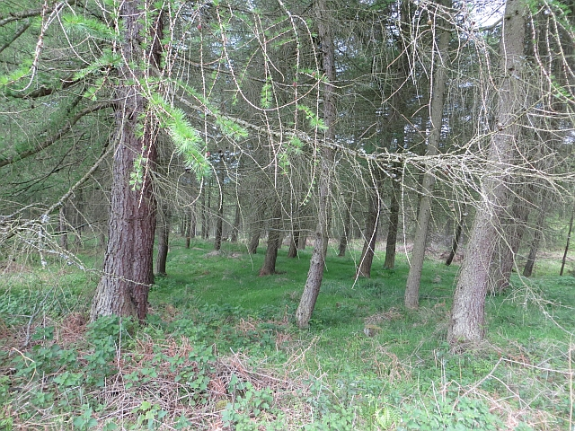 Woodland, Chillingham