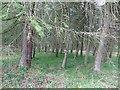 NU0725 : Woodland, Chillingham by Richard Webb