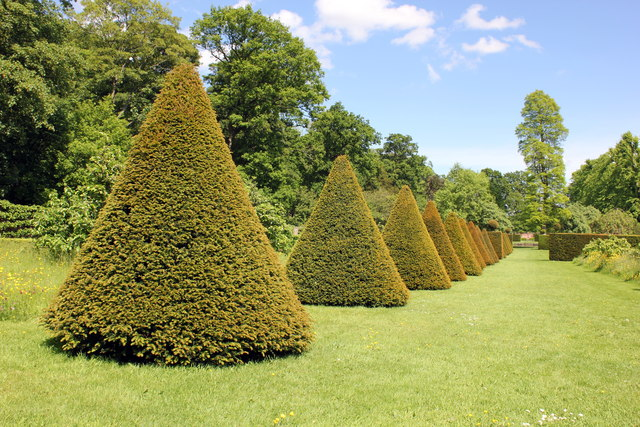 Clipped Yew Cones at Erddig