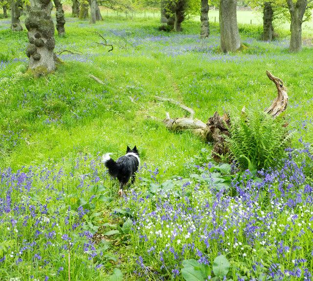 At the top of the circular walk of Drummondreach Wood