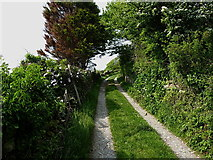 SD1184 : The Black Combe bridleway near Whitbeck by Richard Law