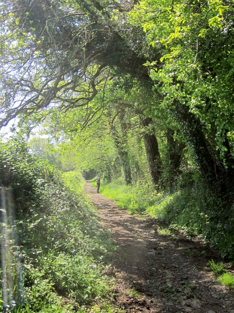 Templer Way at Oak Coppices