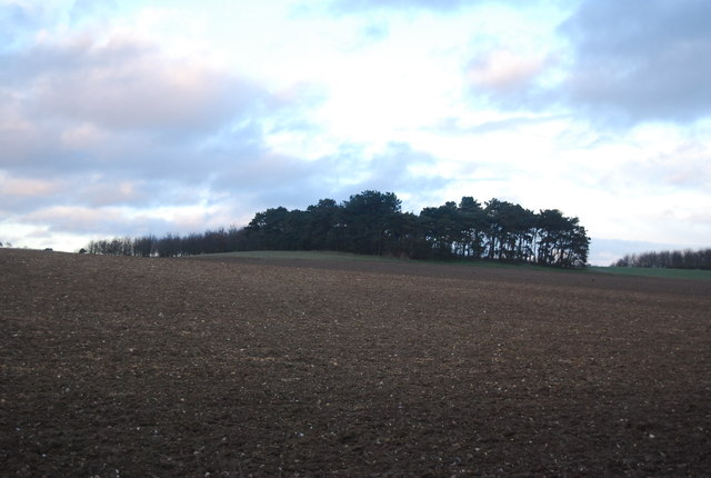 Woodland on a hilltop