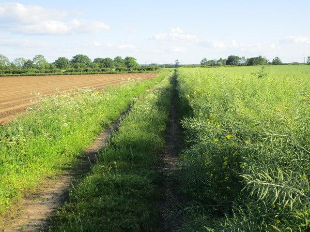 Bridleway to Sand Lane