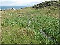 NR3993 : Marshy stream at Scalasaig by M J Richardson