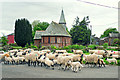 NY6139 : Sheep being driven past Old St John's Church by Rose and Trev Clough
