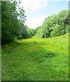 SD7311 : Footpath at Longsight by Philip Platt
