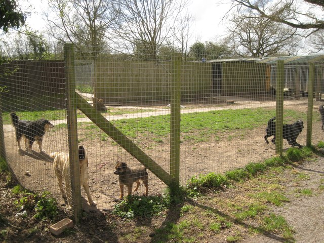 Barking dogs in an enclosure at The Kennels, between Astwood Bank and Studley