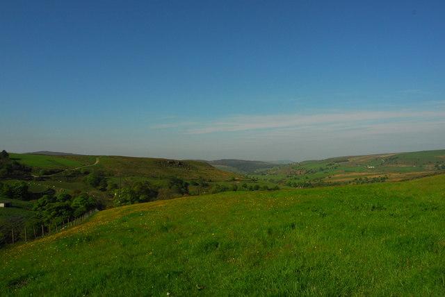 Pasture at Axe Edge Green Farm