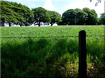 H5776 : Grass field, Loughmacrory by Kenneth  Allen