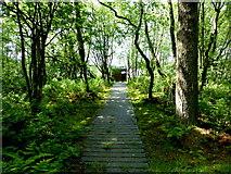 H5776 : Boarded path, Altdrumman by Kenneth  Allen