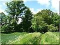 SU0054 : Russell Mill & Strawberry Hill Walk [15] by Christine Johnstone