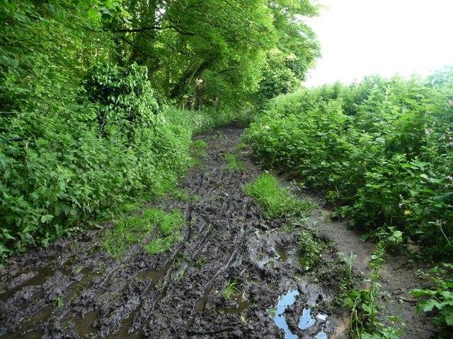 Russell Mill & Strawberry Hill Walk [16]