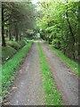 NY1023 : Track through trees to Bramley by Matthew Hatton