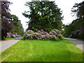 TF6627 : Rhododendrons at The Scissors Crossroads, Wolferton by Richard Humphrey
