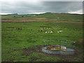 SD7862 : Sheep feeder below Birchshow Rocks by Karl and Ali