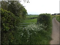 SX6296 : Track between fields near Higher Corscombe by David Smith