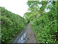 SU0256 : 'Down through a tree-lined cutting' by Christine Johnstone