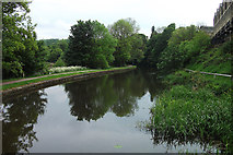 SE1039 : Leeds Liverpool Canal, Bingley by michael ely