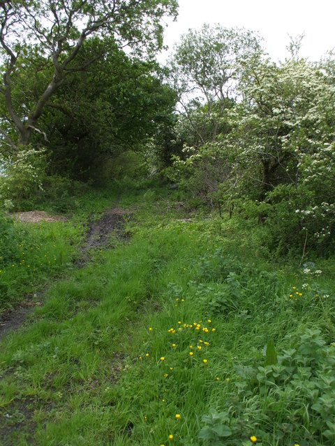 Overgrown Bridleway to Crosby