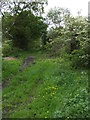 NY0936 : Overgrown Bridleway to Crosby by Matthew Hatton