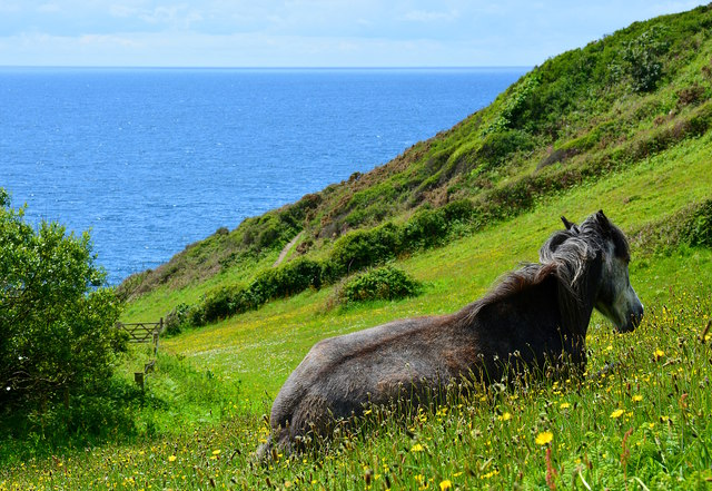 Pony with a view, near Lansallos, Cornwall