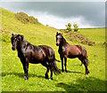 SX1750 : Ponies on the path, near Lansallos, Cornwall by Edmund Shaw
