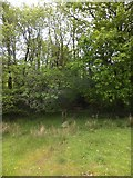 SX6397 : Footbridge on the Devonshire Heartland Way near Trehill by David Smith