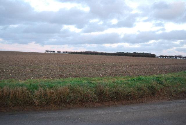 Field in North Norfolk