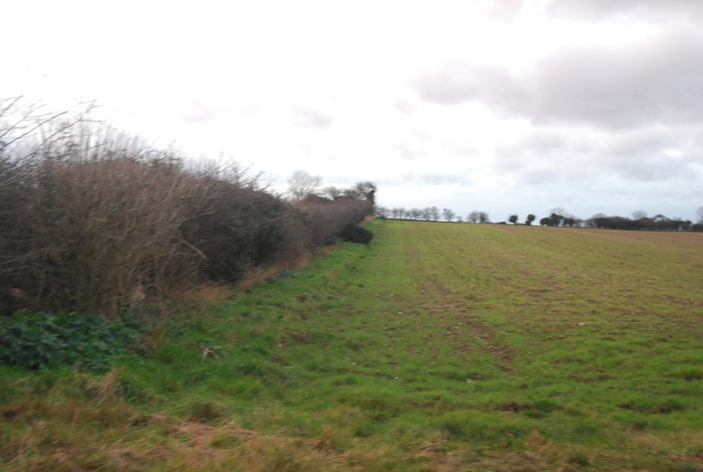 Hedge / field boundary