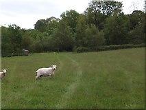 SX6397 : Devonshire Heartland Way crossing a field near Trehill by David Smith