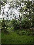 SX6497 : Footpath along a sunken track near Halford by David Smith