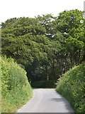 SX6698 : Woods at North Wyke by David Smith