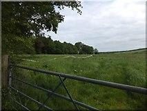 SX6698 : Grassland and woodland at North Wyke by David Smith