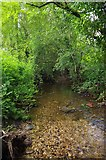 TL7538 : River Colne by Glyn Baker